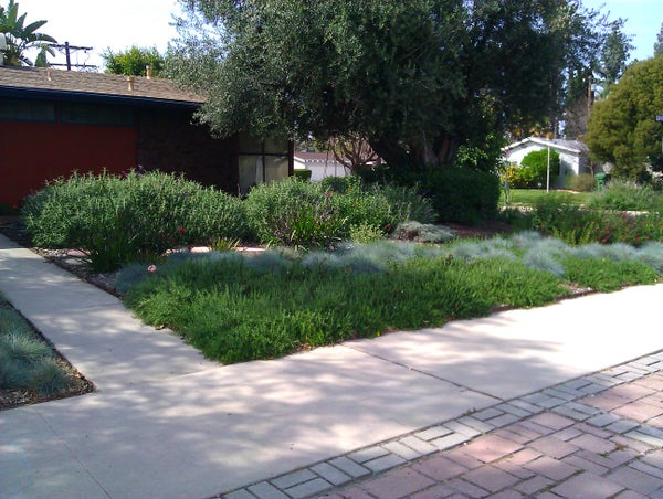 Smother and Replace Your Lawn With Mulch