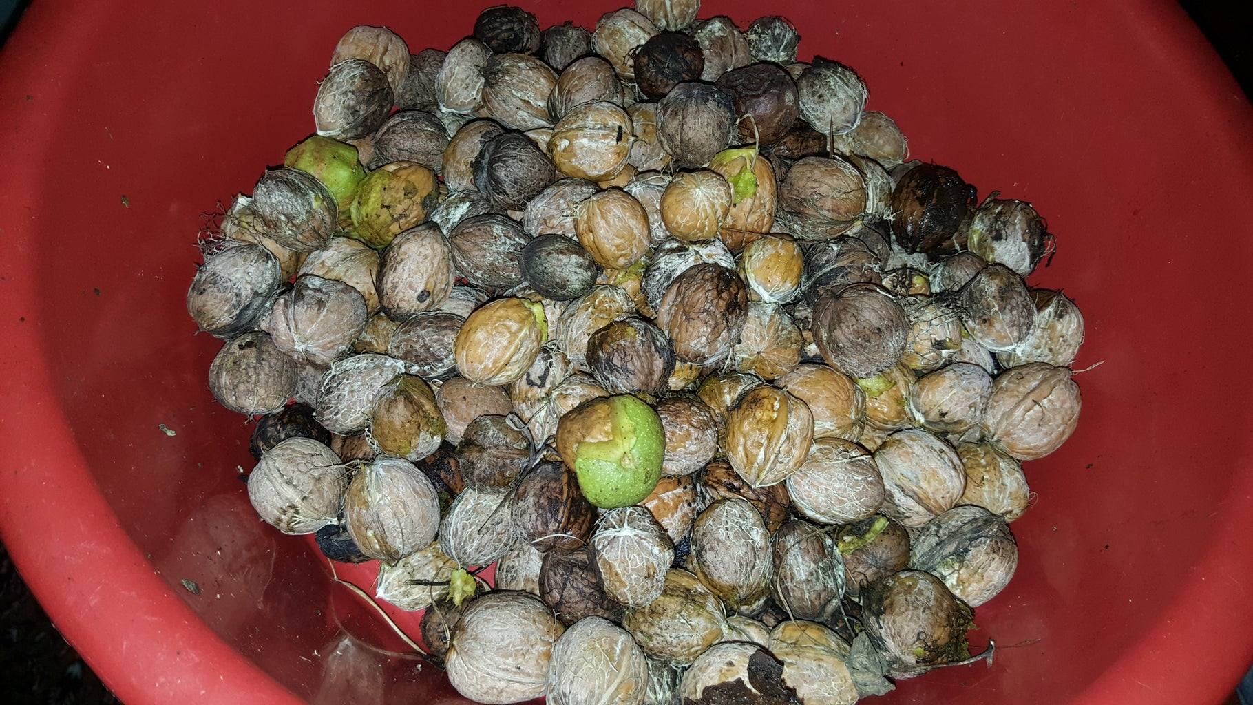 There Are Two Methods to Remove the Green Skin of Walnuts