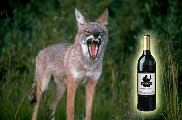 Open a Wine Bottle in the Wilderness
