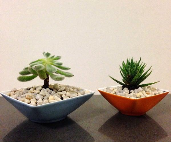 How to Make a Succulent Teacup Garden