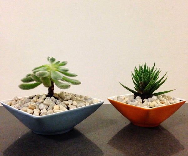 How to Make a Succulent Teacup Garden