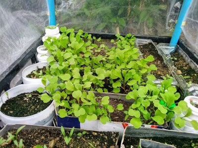 Low Cost Mini Greenhouse (100% Plastic) With Reused Materials