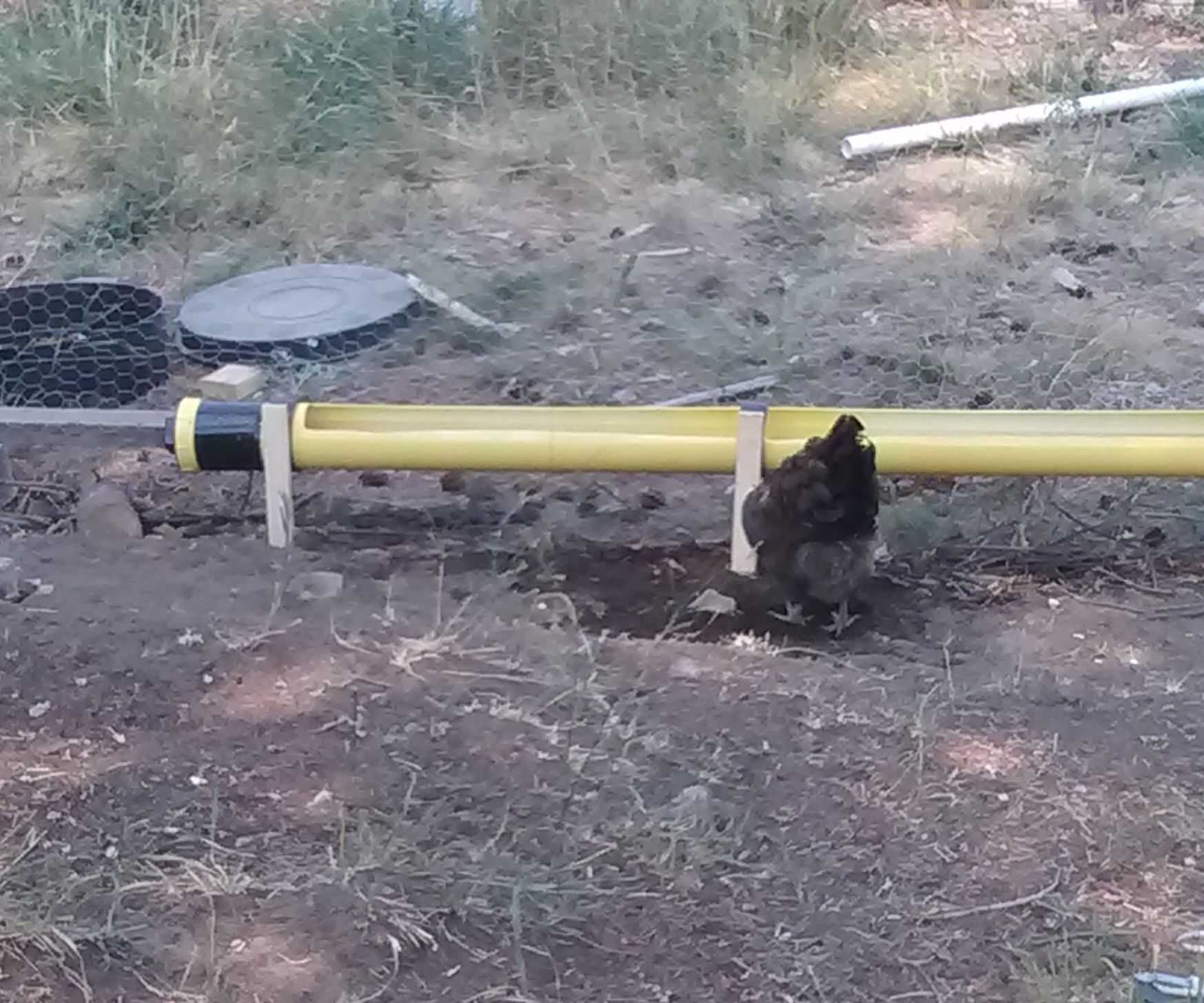 PVC Automatic Chicken Waterer