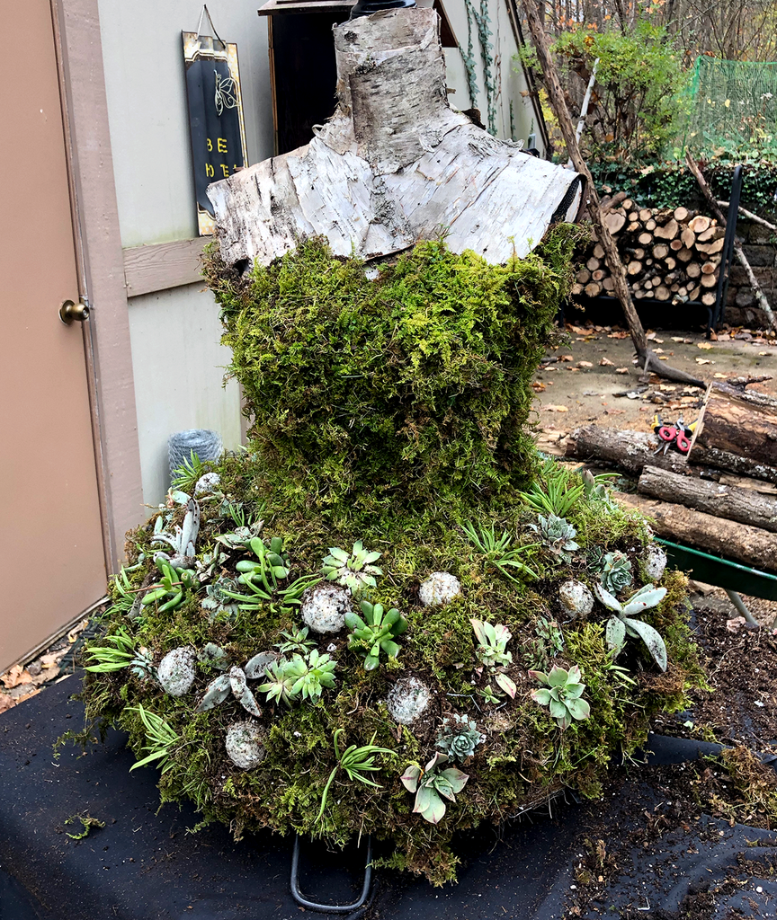 Fill Open Areas Around the Succulents With Moss