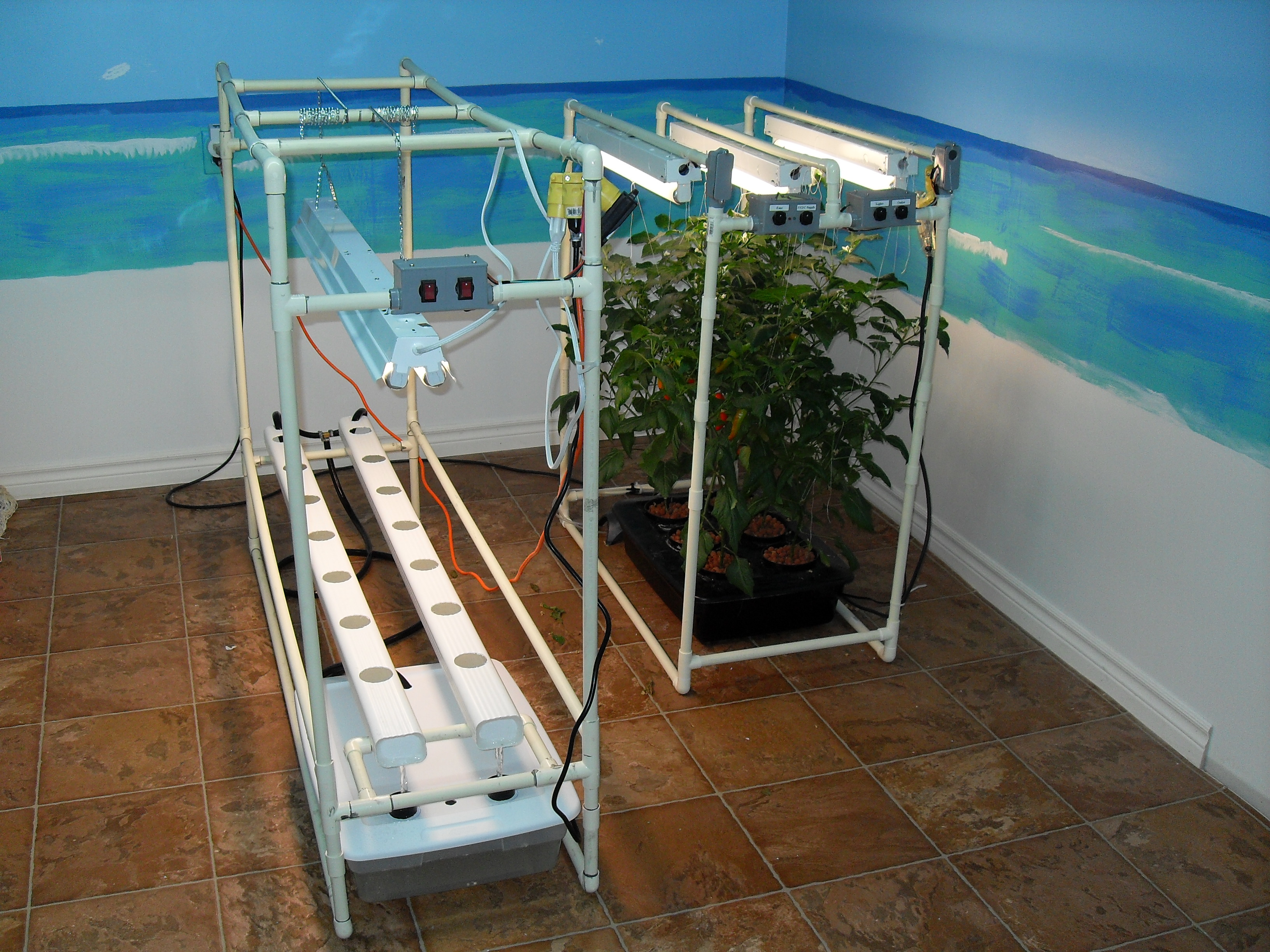 My Indoor NFT Hydroponics System
