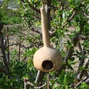 Simple Gourd Birdhouse With a Branch