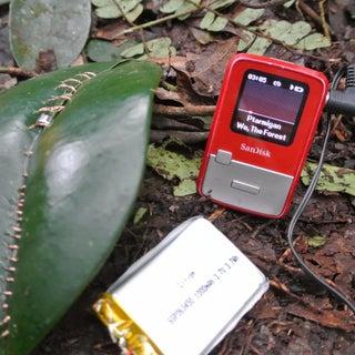 Jungle Speakers