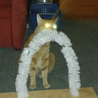 Hands Free Cat Scratcher