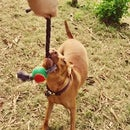 T Shirt Dog Toy With Ball