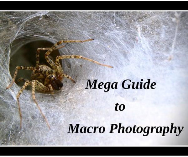 Mega Guide to Macro Photography