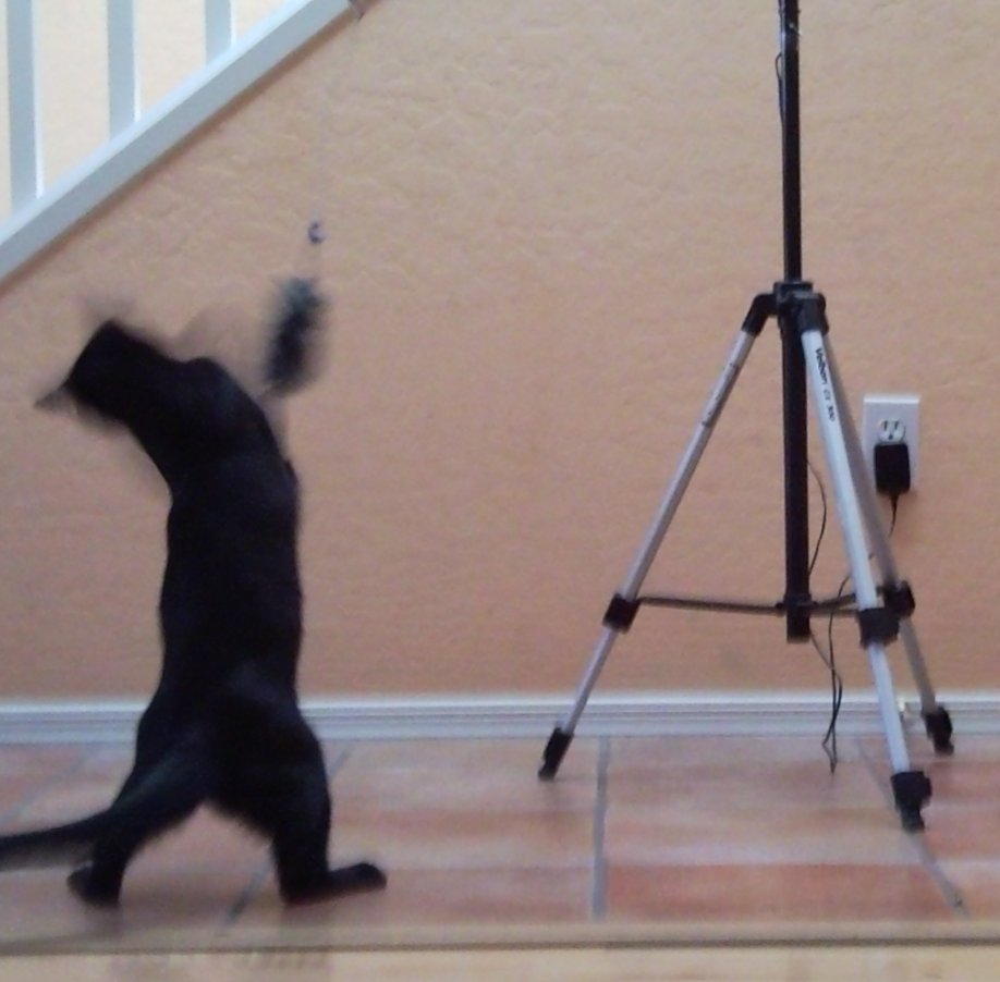 Motion Sensor Cat Toy (endless fun... literally)