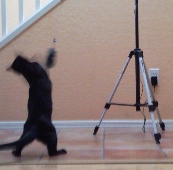 Motion Sensor Cat Toy (endless Fun... Literally)