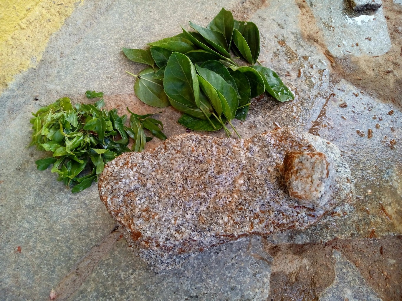 Take the Stone for Grinding the Leaves