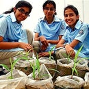 How to grow crops in bags or sacks - Part 2
