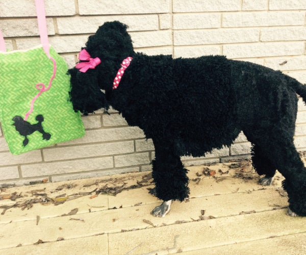 Poodle Costume for a Dog