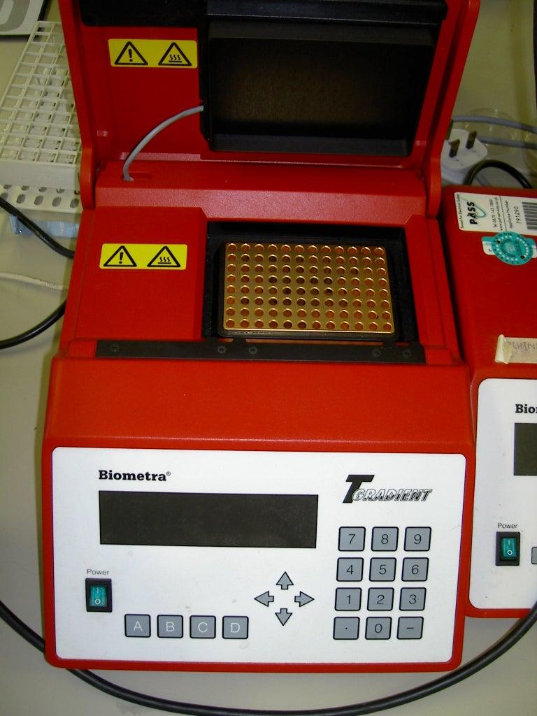 Paper Disk DNA Preparation