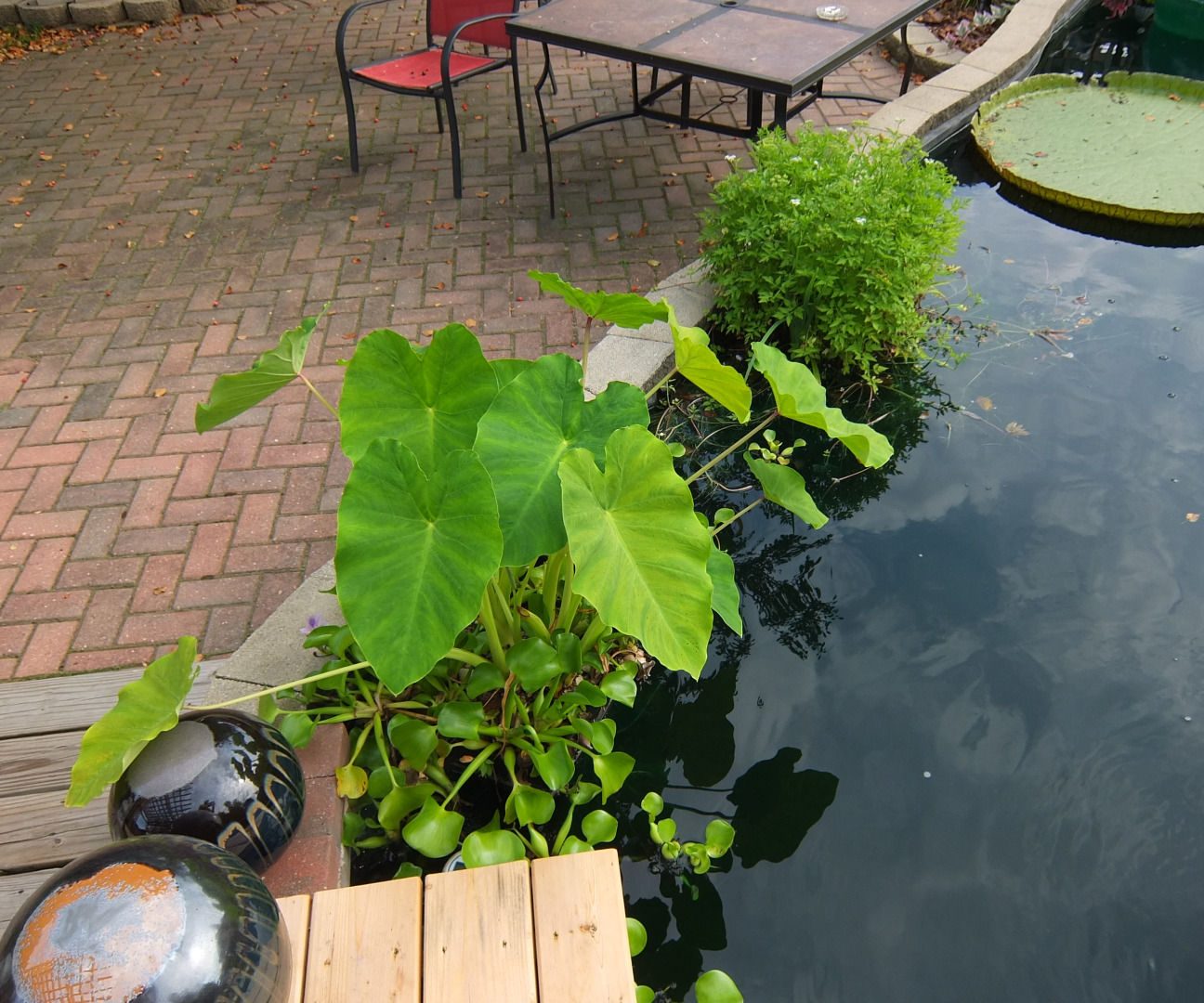 Pond Planter from a milk crate