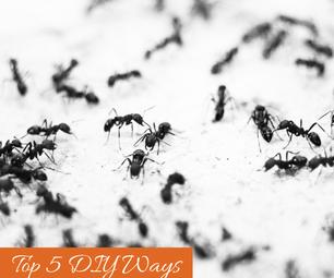 Top 5 DIY Ways to Get Rid of Ants