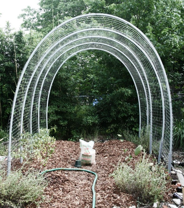The ULTIMATE Tomato Hoop House Trellis of Death and Dismemberment