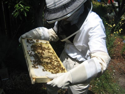 Now What? Nurture Your Bees and Learn From Them.