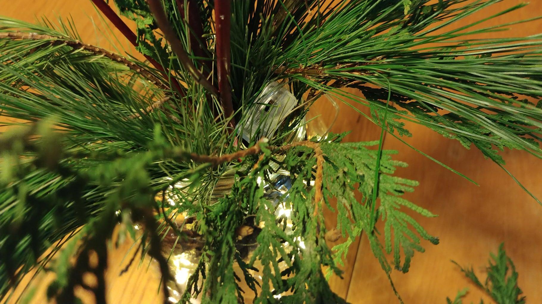 Adding Your Coniferous