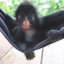 "How to Make Jungle Jam With a Monkey ""Helper"""
