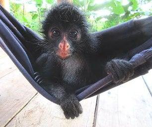 How to Make Jungle Jam With a Monkey