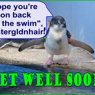 eCard Get well soon b penguin.jpg