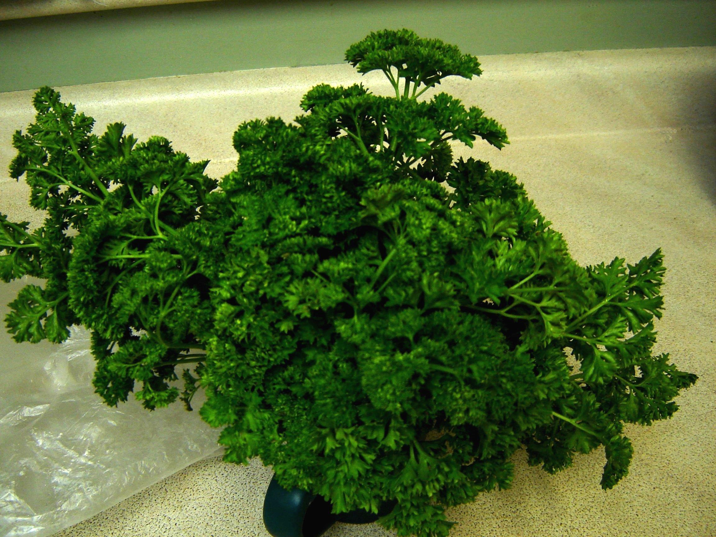 How to keep Fresh Herbs Fresh