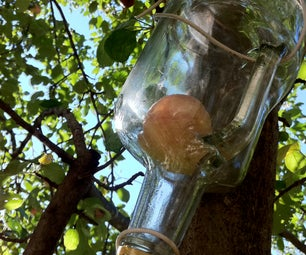 How to Grow an Apple in a Bottle