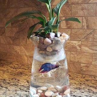 $8 Betta Fish & Flower Vase