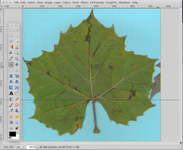 Using GIMP to Measure the Leaf