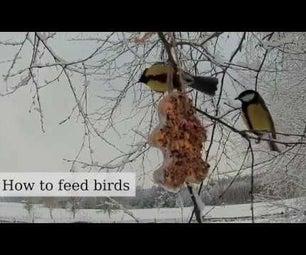 Fast, Great Looking Bird Feeder