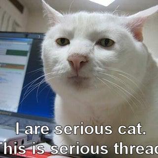 serious cat.jpg