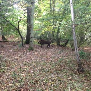Wild Boar!!!!!
