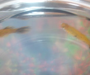 See If Your Fish Had Babies