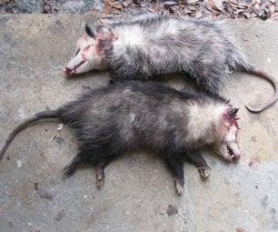 Possum Jerky