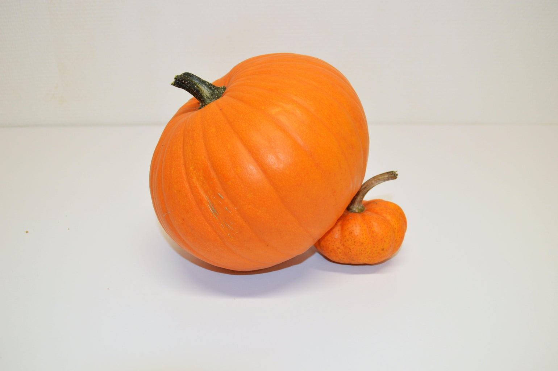 Pick the Perfect Pumpkins