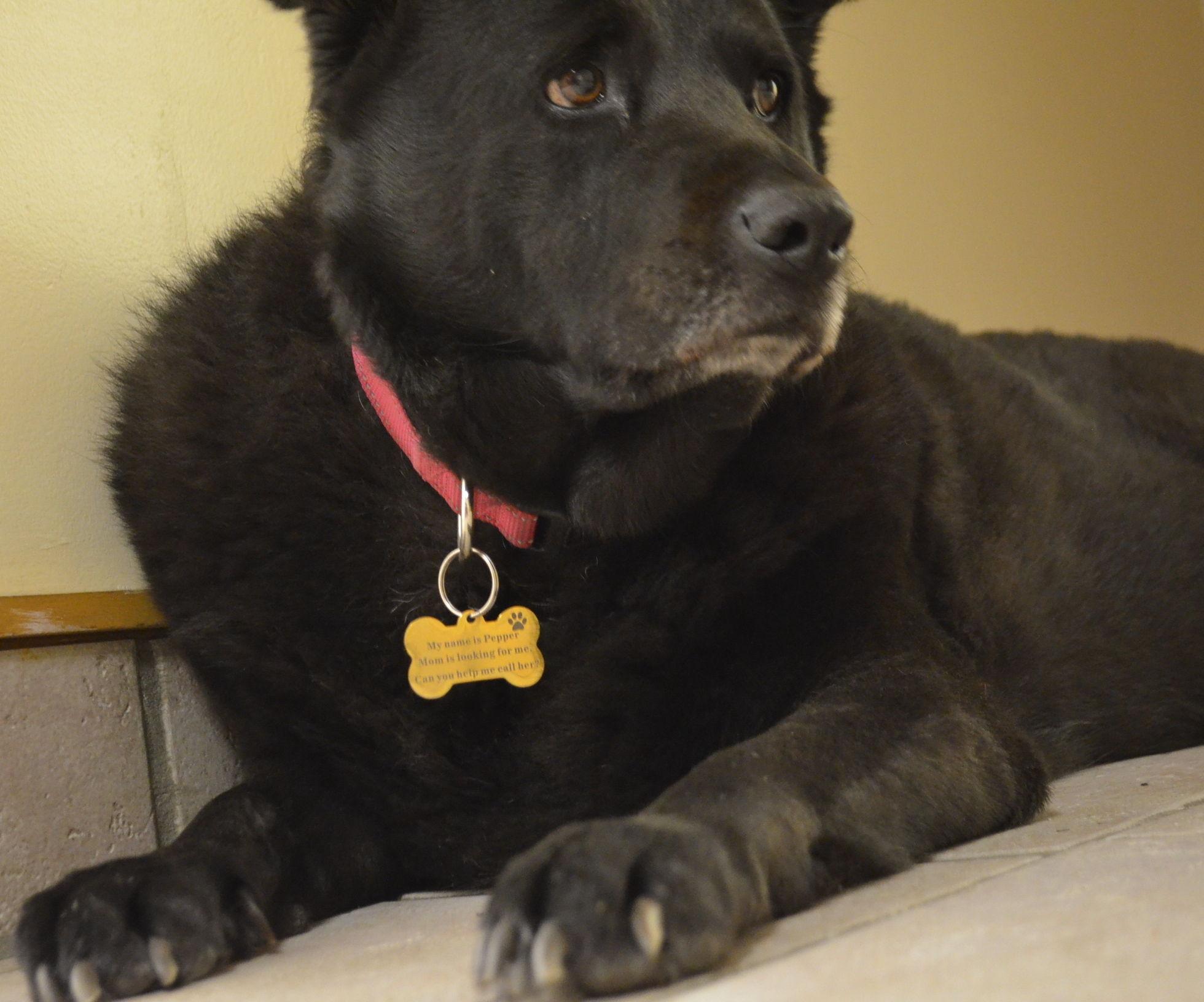 Pet Collar ID Tag