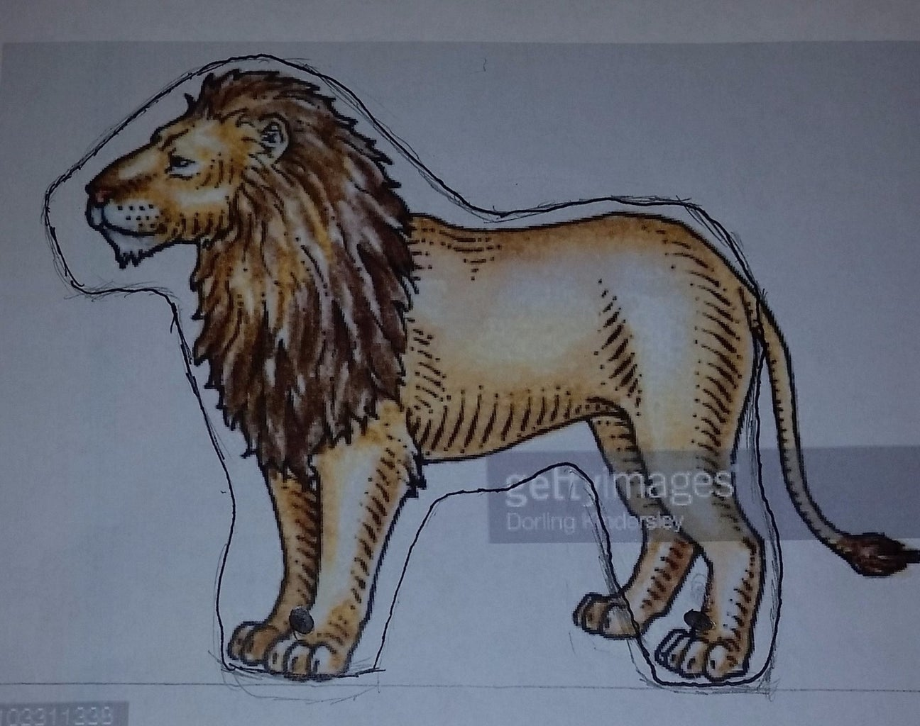 Tracing Out the Lion