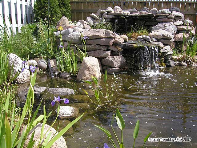 Pond or Water Garden - How to build a Backyard Pond