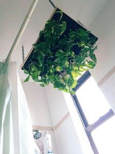 Step 10: Hang Planter