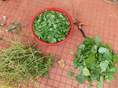 Remove Roots and Chop Weeds
