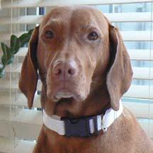 How To Make An Adjustable Dog Collar