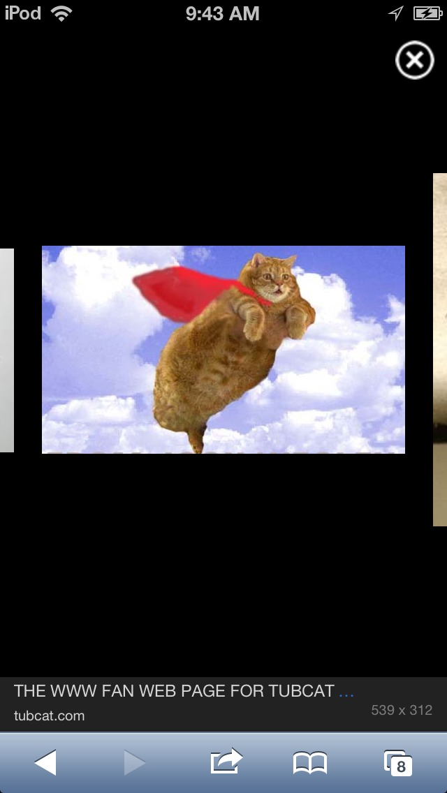 Teach Your Cat To Fly!!!