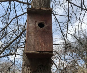 How to Attach a Birdhouse to a Tree Without Harming the Tree