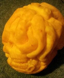 Octopus Vs. Human Skull