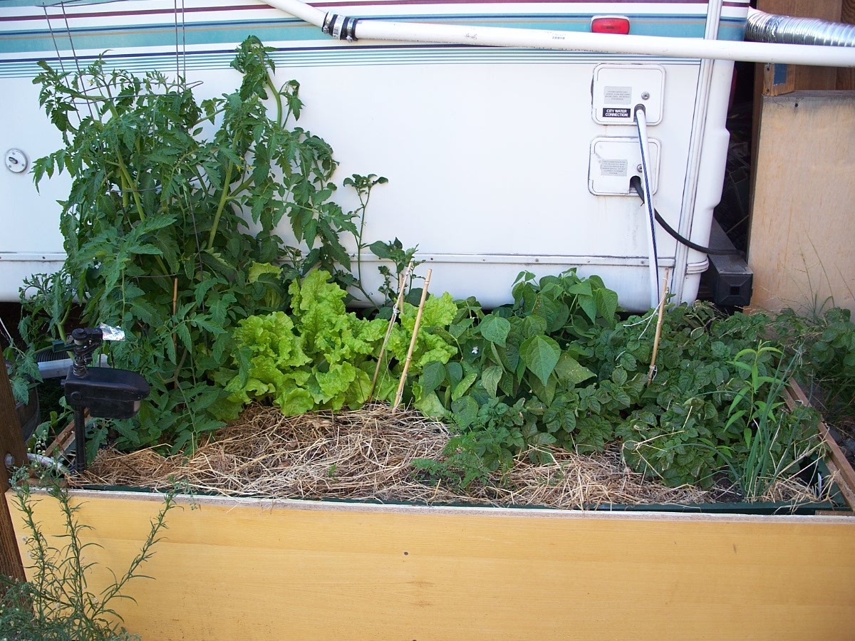 Large Self-Watering Planter + rain water storage UPDATE