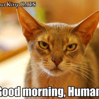 Good morning, human.jpg