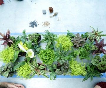 Choosing Your Plants